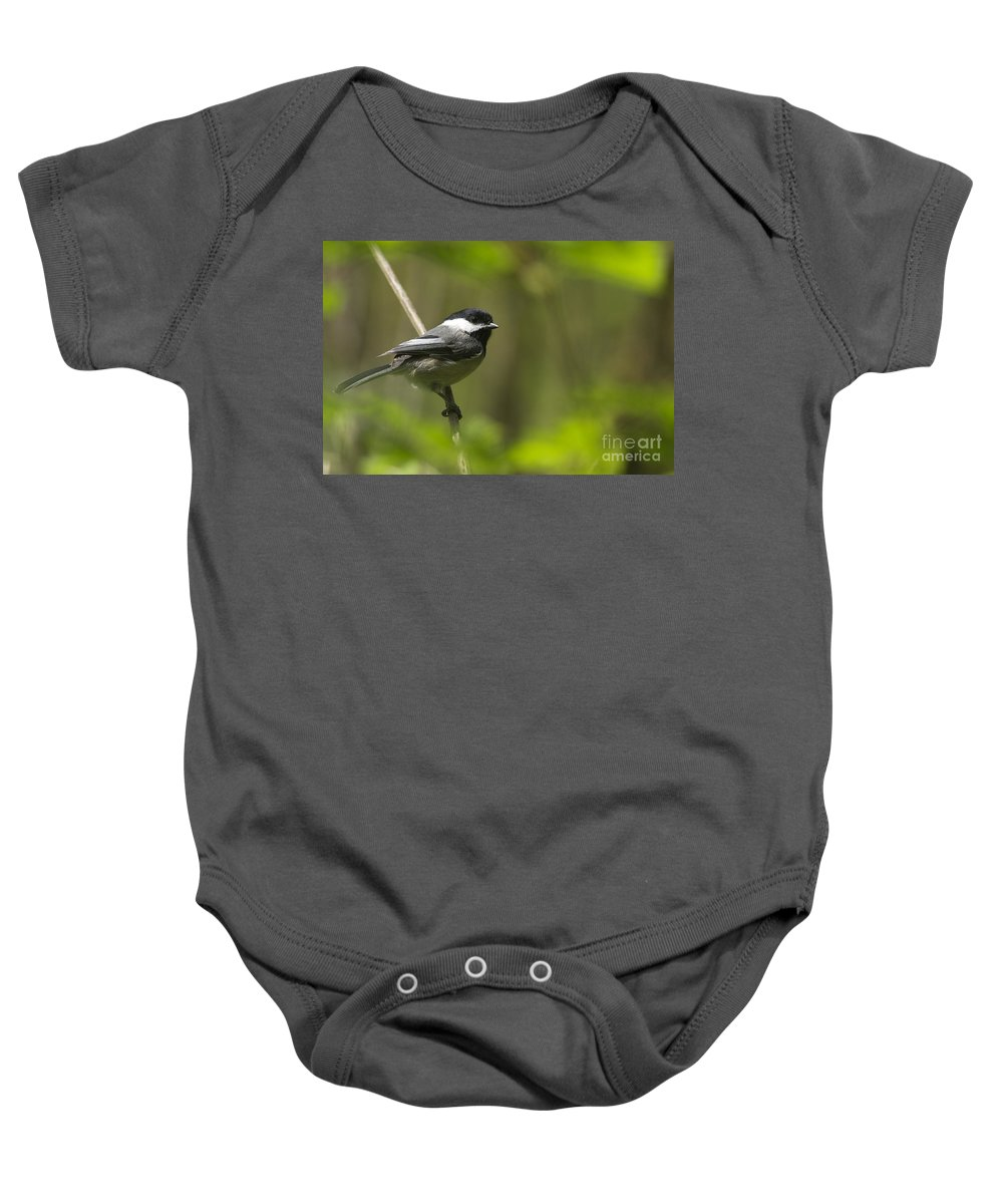 Black-capped Chickadee Baby Onesie featuring the photograph Black-capped Chickadee by Sharon Talson