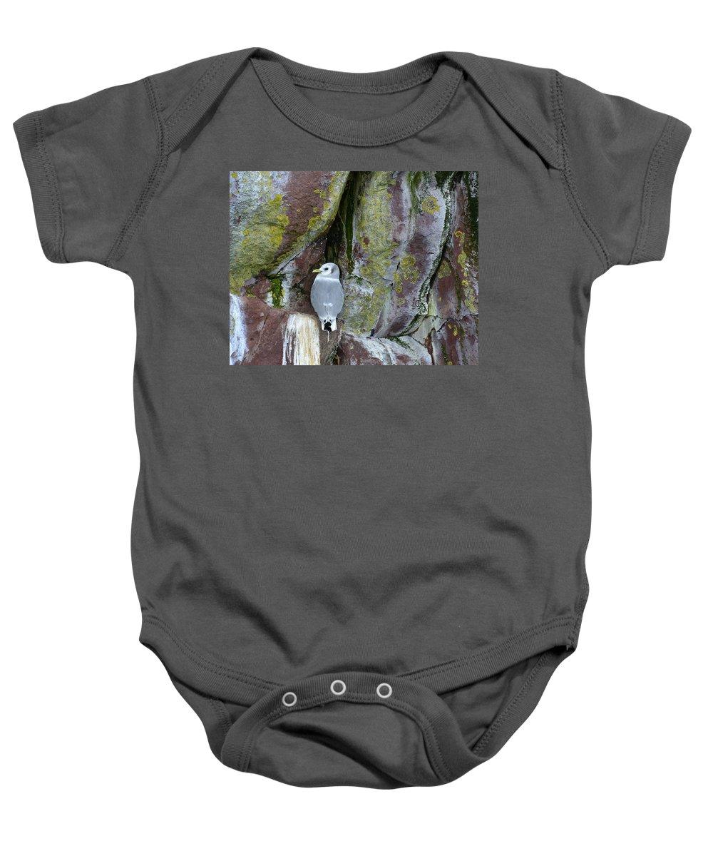 Wildlife Baby Onesie featuring the photograph Black Legged Kittiwake by Claudio Bacinello