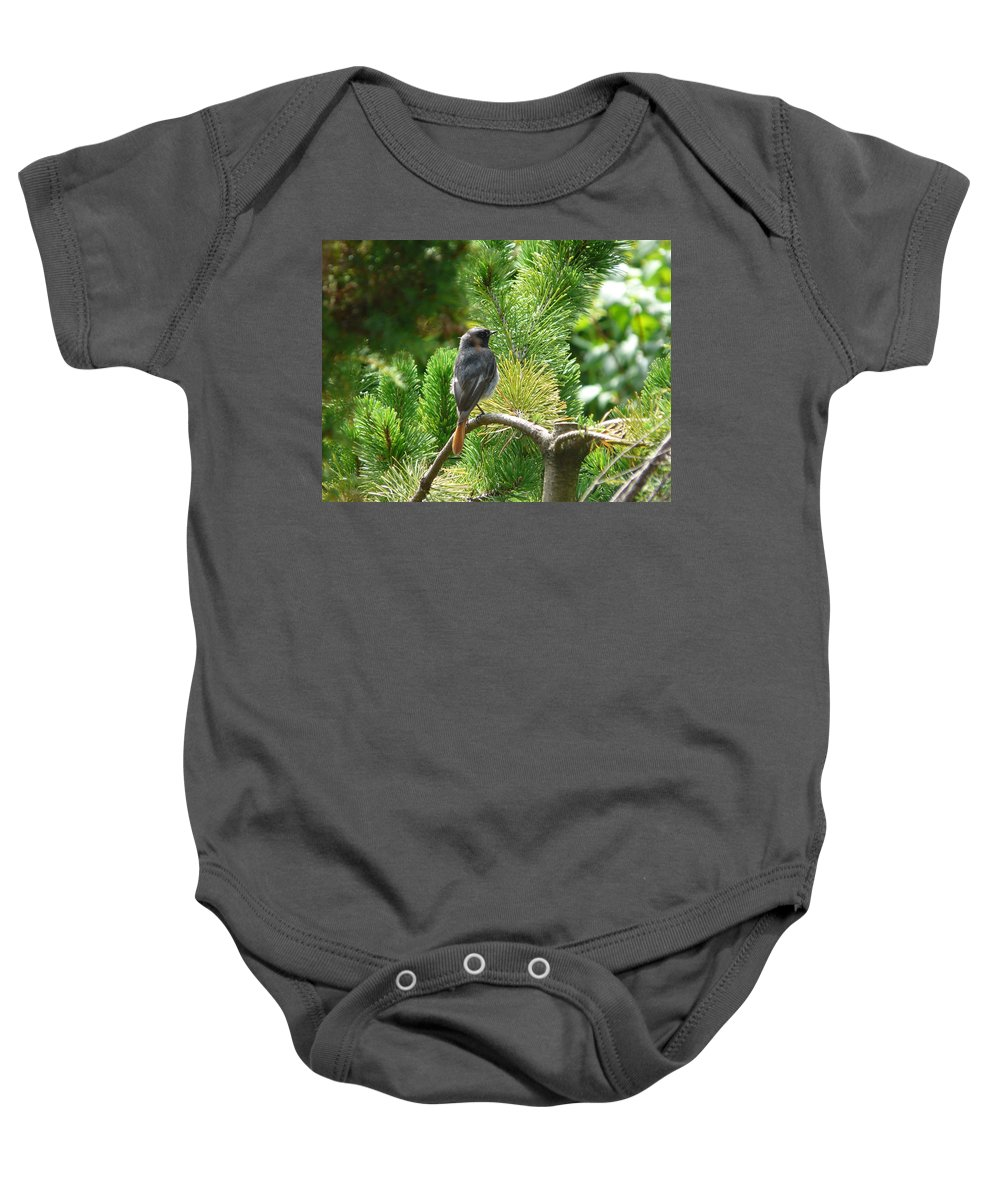 Bird Baby Onesie featuring the photograph Black Redstart by Valerie Ornstein