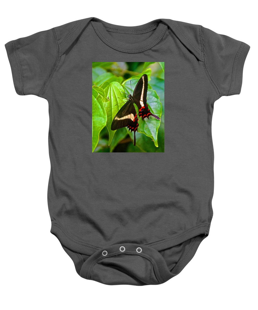 Black Swallowtail Butterfly In Iguazu Falls National Park Baby Onesie featuring the photograph Black Swallowtail Butterfly In Iguazu Falls National Park-brazil by Ruth Hager
