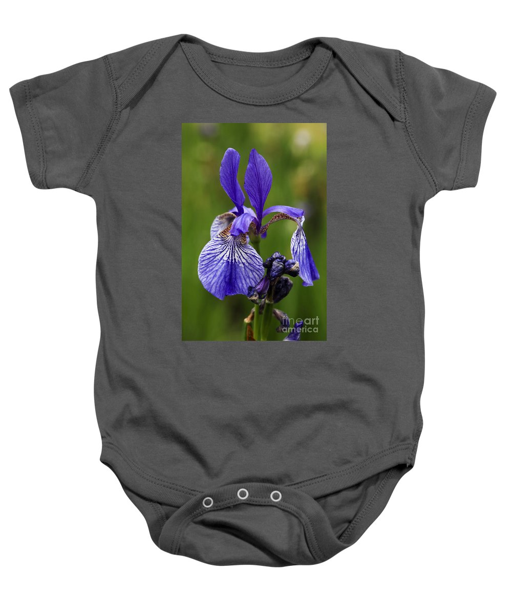 Iris Baby Onesie featuring the photograph Blooming Purple Iris by Vladi Alon