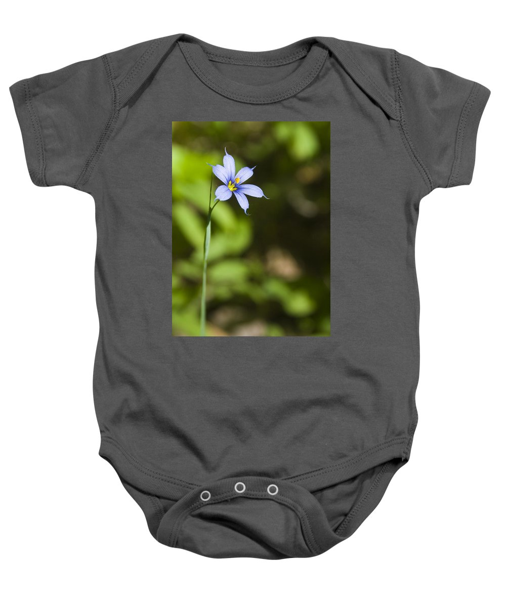 Blue Eye Grass Flower Nature Yellow Green Delicate Small Little Baby Onesie featuring the photograph Blue-eyed Grass IIi by Andrei Shliakhau