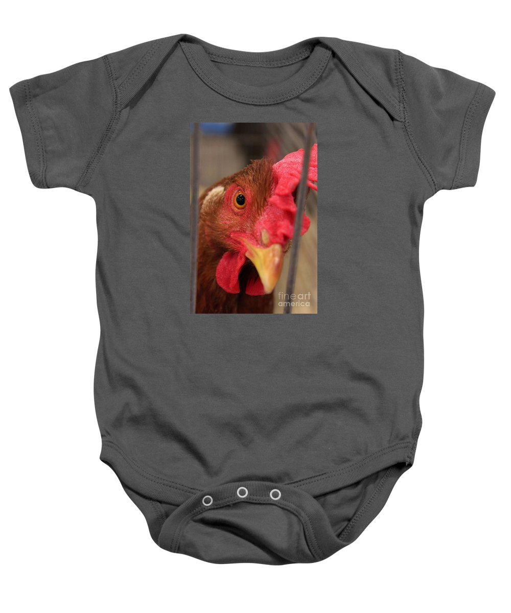 Chicken Baby Onesie featuring the photograph Bright And Colorful Chicken Who Are You by Robert D Brozek
