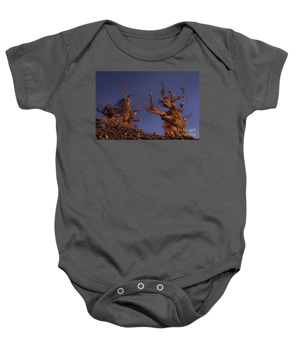 Bristlecone Pine Baby Onesie featuring the photograph Bristlecone Pines At Sunset With A Rising Moon by Dave Welling