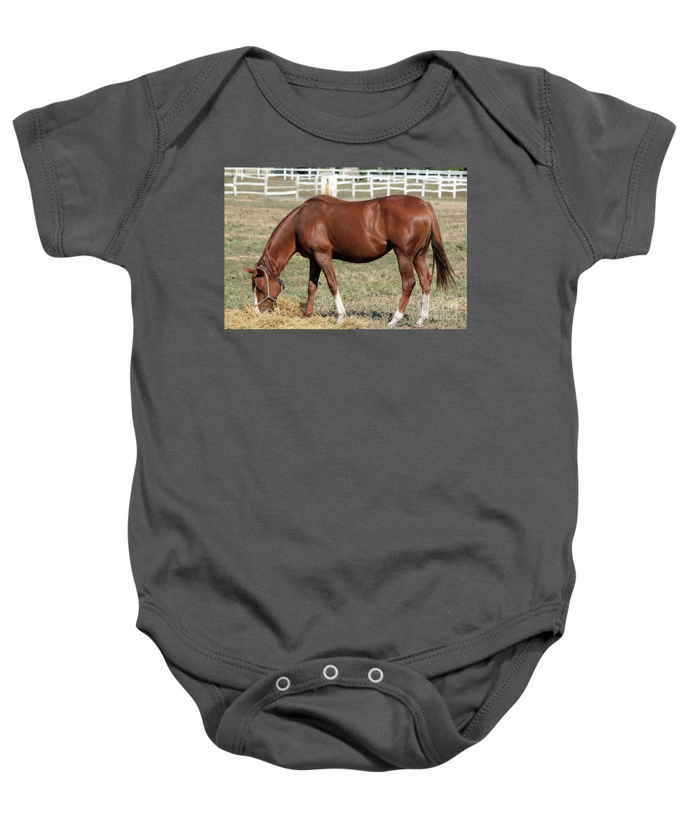 Horse Baby Onesie featuring the photograph Brown Horse Eat Ranch Scene by Goce Risteski
