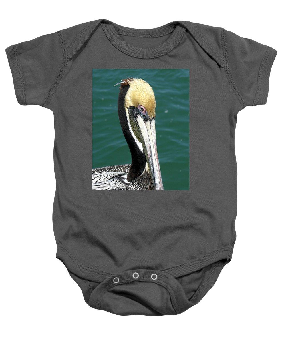 Pelecanus; Occidentalis; American; Brown; Pelican; Bird; Sea; Seabird; Ocean; Space; Coast; Cape; Ca Baby Onesie featuring the photograph Brown Pelican by Allan Hughes