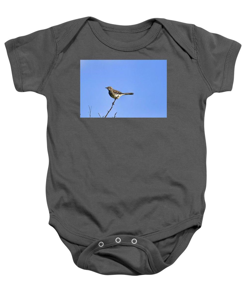 Recent Baby Onesie featuring the photograph Northern Mockingbird by Geraldine Scull