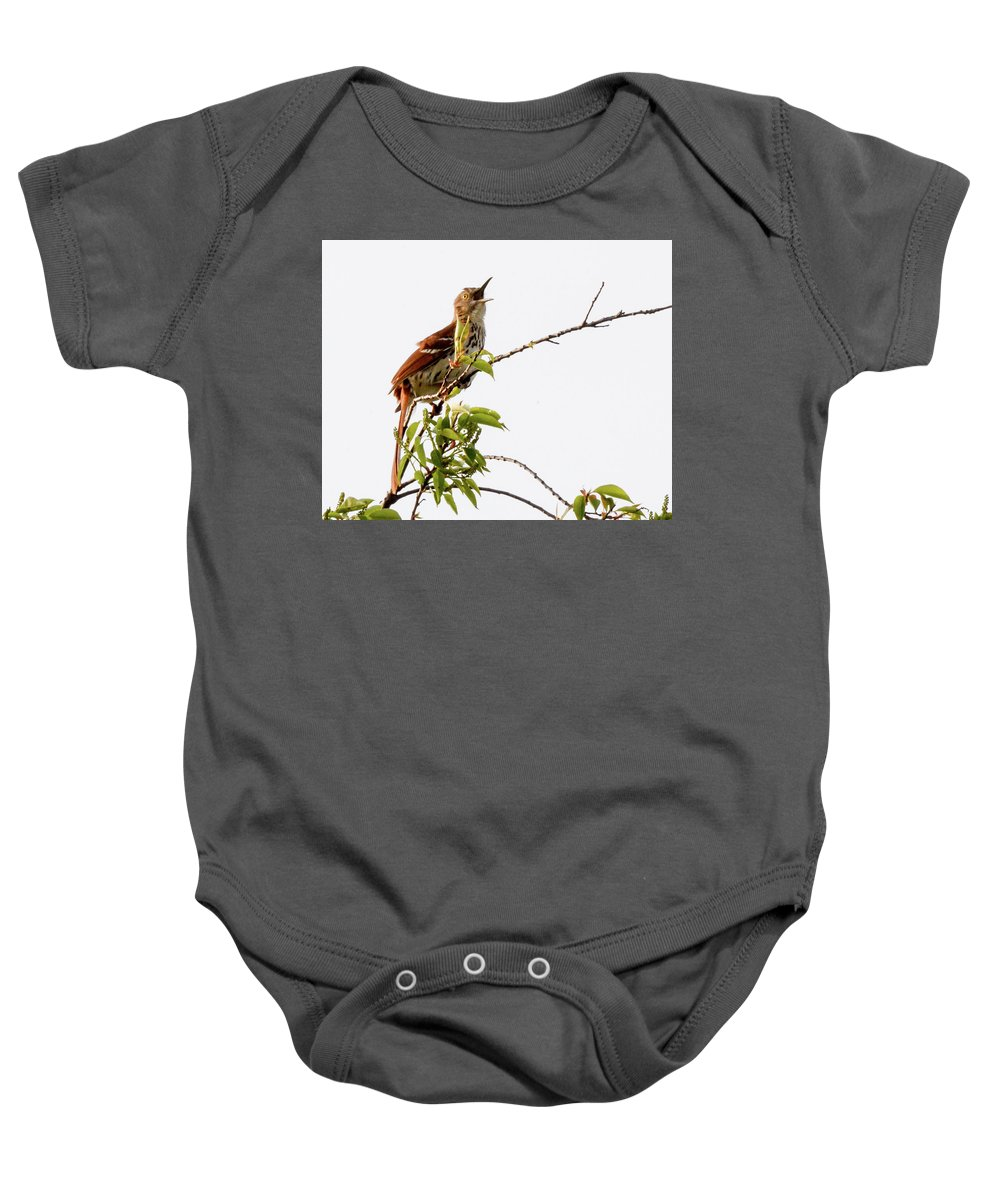 Bird Baby Onesie featuring the photograph Brown Thrasher - I Am Here by Donald Nelson