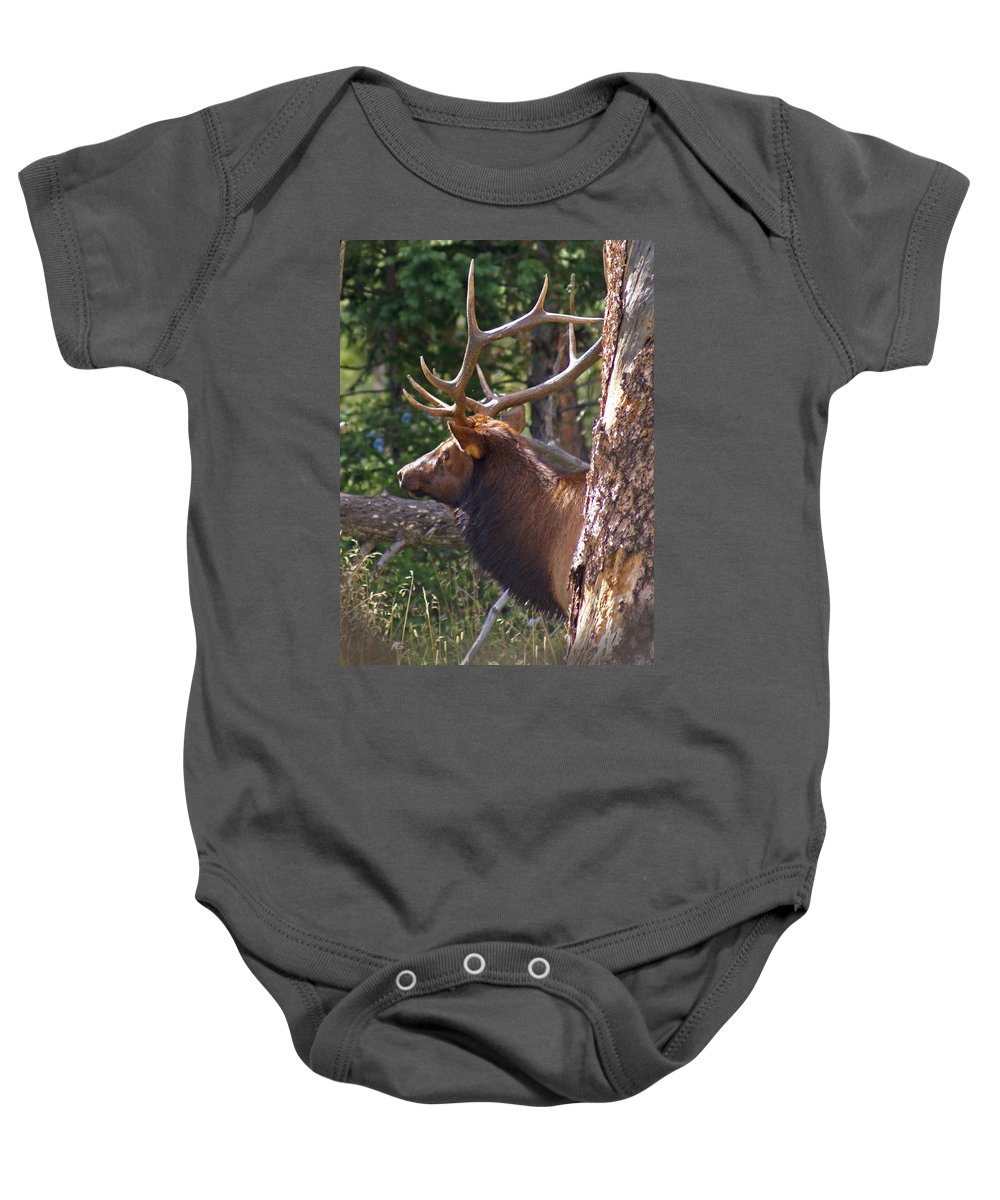 Elk Baby Onesie featuring the photograph Bull Elk 2 by Heather Coen