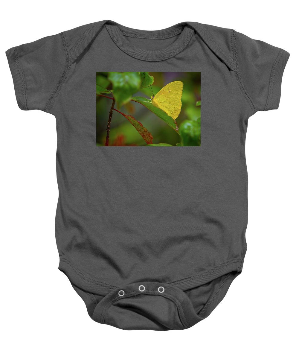 Florida Butterflies Baby Onesie featuring the photograph Butterfly by Dennis Goodman