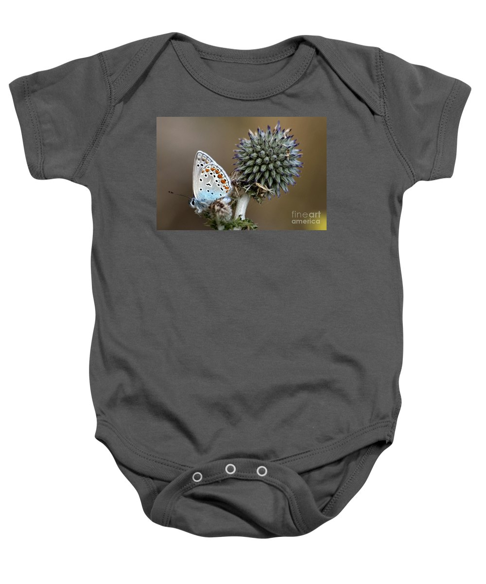 Butterfly Baby Onesie featuring the photograph butterfly on a Echinops adenocaulon by Nahum Budin