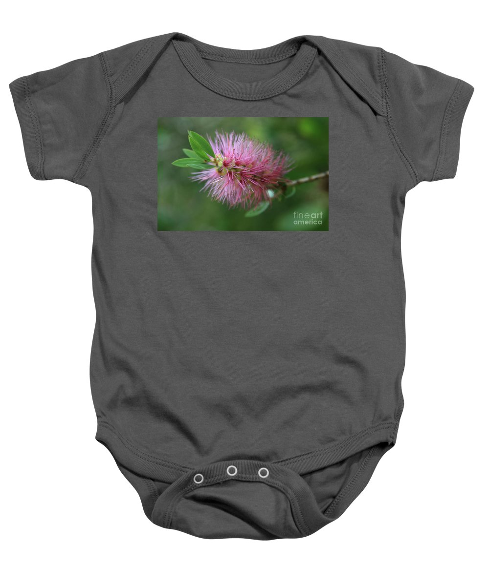 Callistemon Viminalis Baby Onesie featuring the photograph Callistemon Viminalis Taree Pink Weeping Bottlebrush Flowering Trees Of Hawaii by Sharon Mau