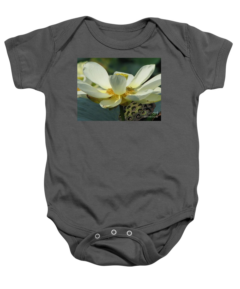 Lotus Baby Onesie featuring the photograph Calm by Amanda Barcon