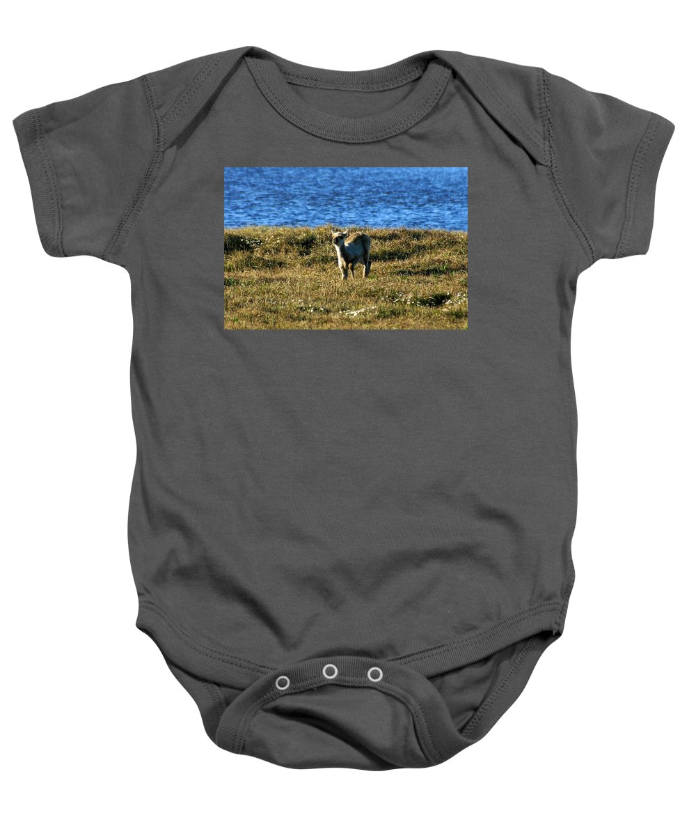 Fawn Baby Onesie featuring the photograph Caribou Fawn by Anthony Jones
