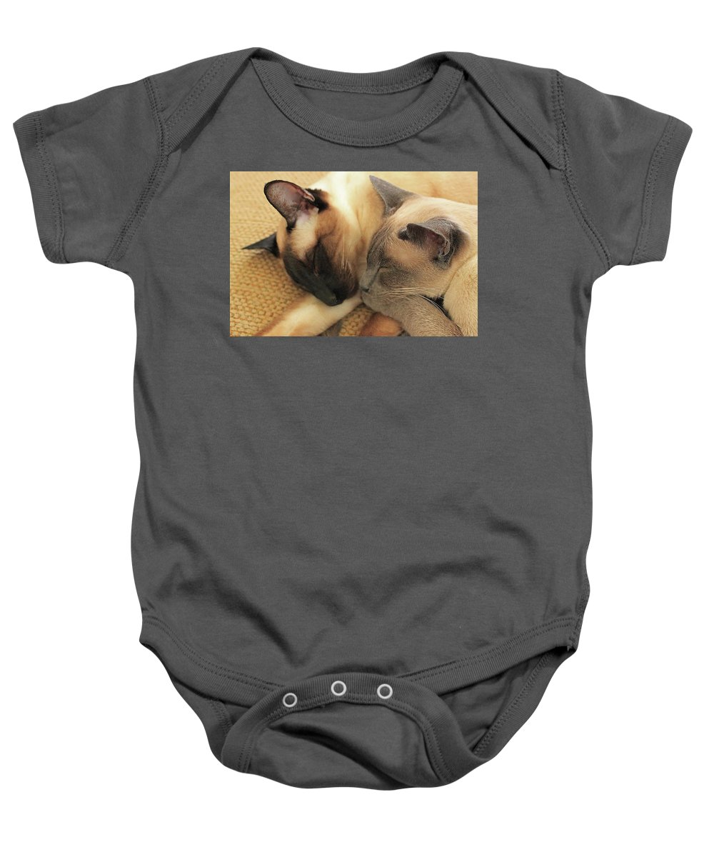 Photography Baby Onesie featuring the photograph Cat Nap With Toby And Sadi by Sharon Mayhak