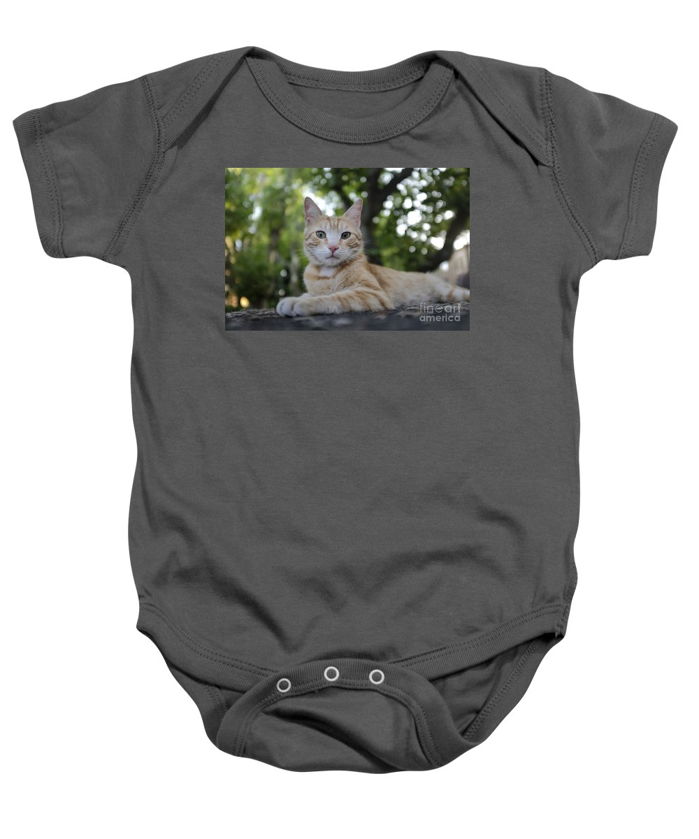 Italy Baby Onesie featuring the photograph Cat Volterra Italy by Edward Fielding