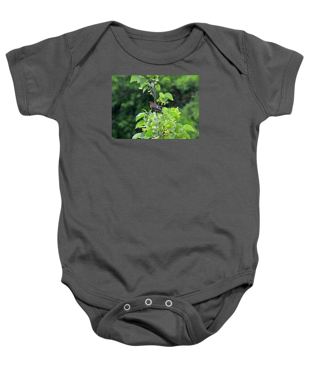 Cedar Waxwing Baby Onesie featuring the photograph Cedar Waxwing by Martin Massari