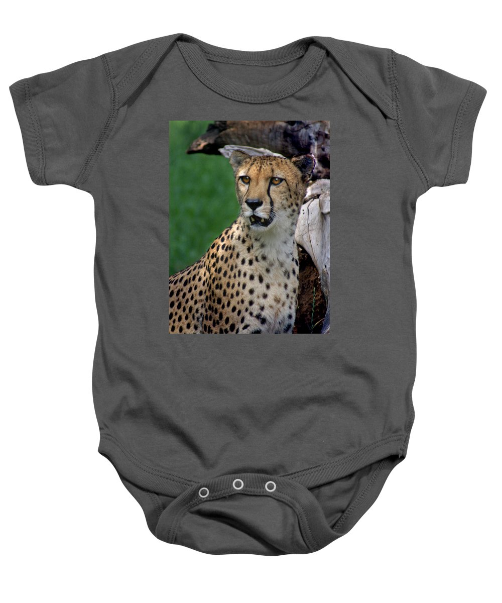 Cheeta Baby Onesie featuring the photograph Cheetah by Heather Coen