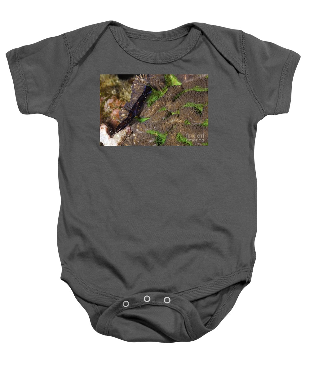 Two Baby Onesie featuring the photograph Chelidonura Punctata Nudibranch by Anthony Totah