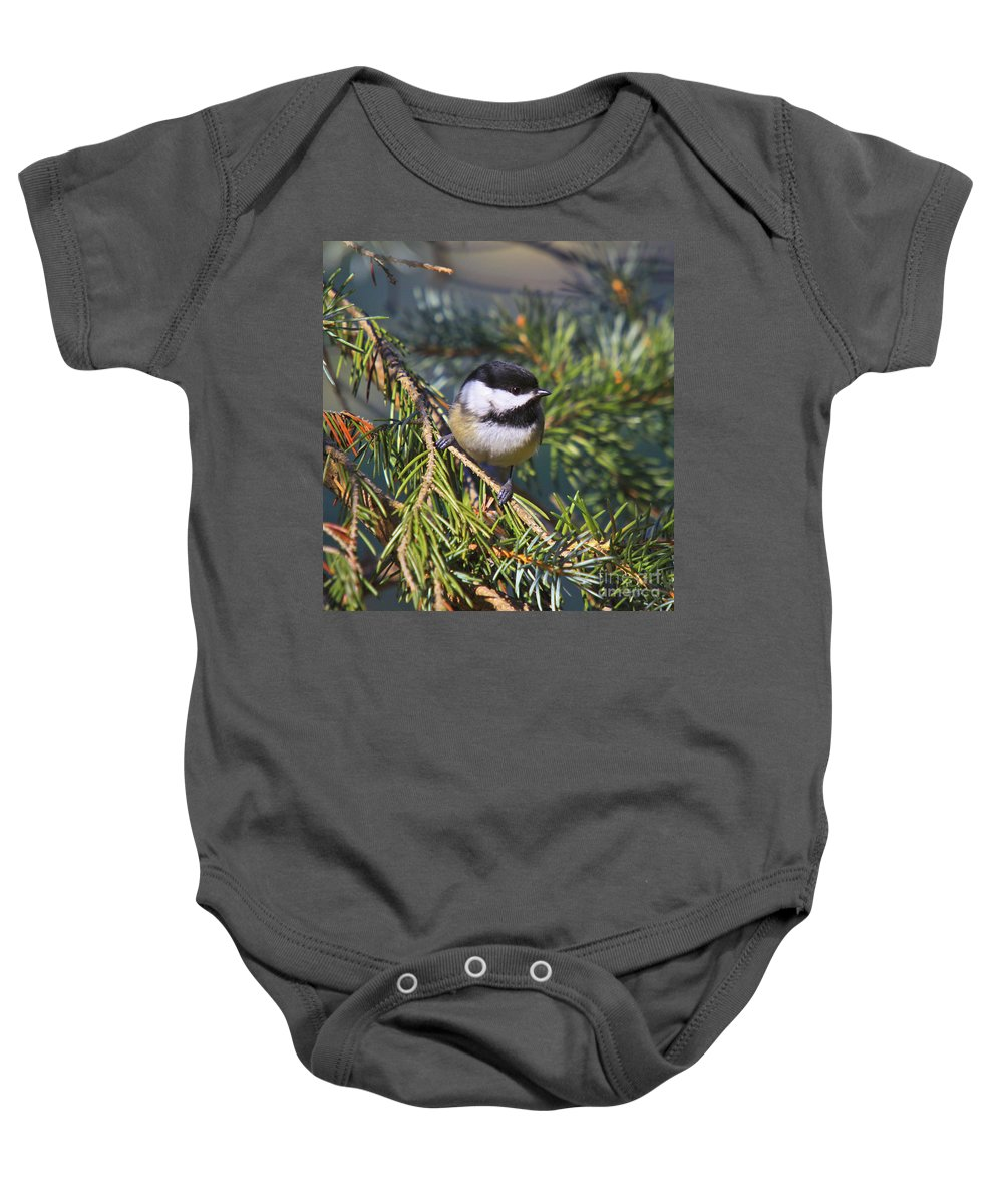 Additional Tags: Baby Onesie featuring the photograph Chickadee-12 by Robert Pearson