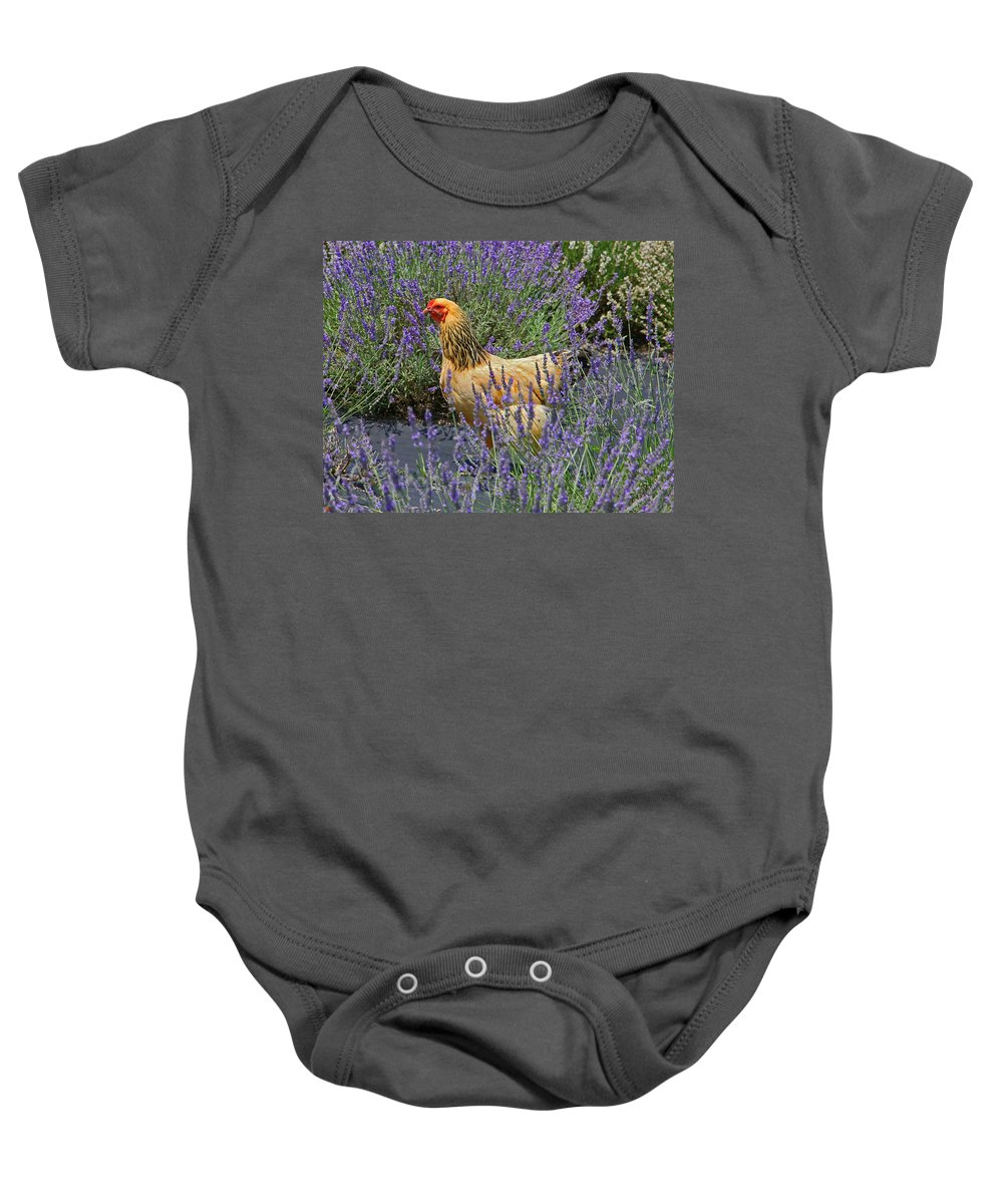 White Oak Lavender Farm Baby Onesie featuring the photograph Chicken In The Lavender by Suzanne Stout