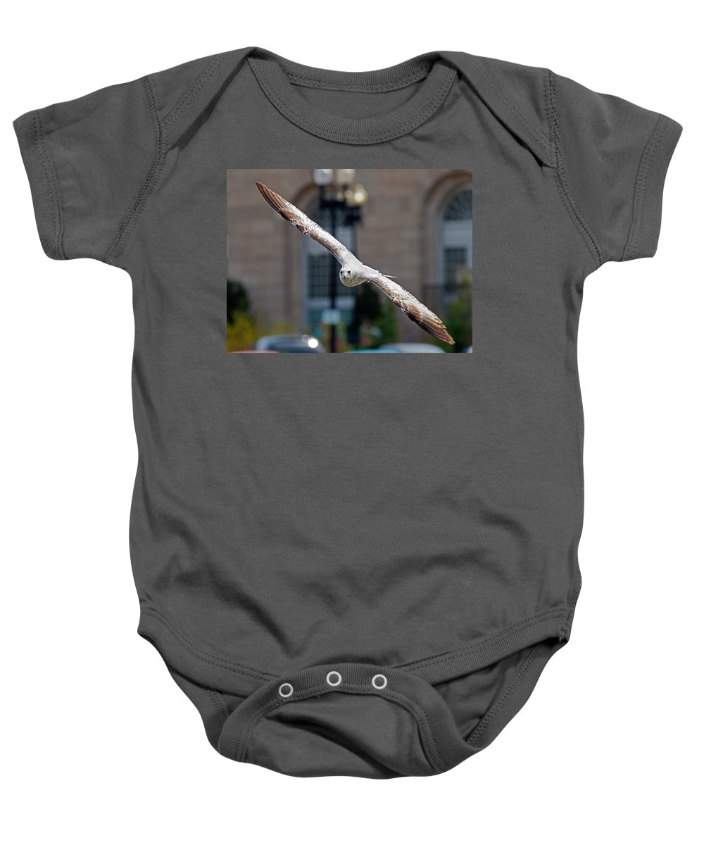 Seagull Baby Onesie featuring the photograph City Gull by David Freuthal