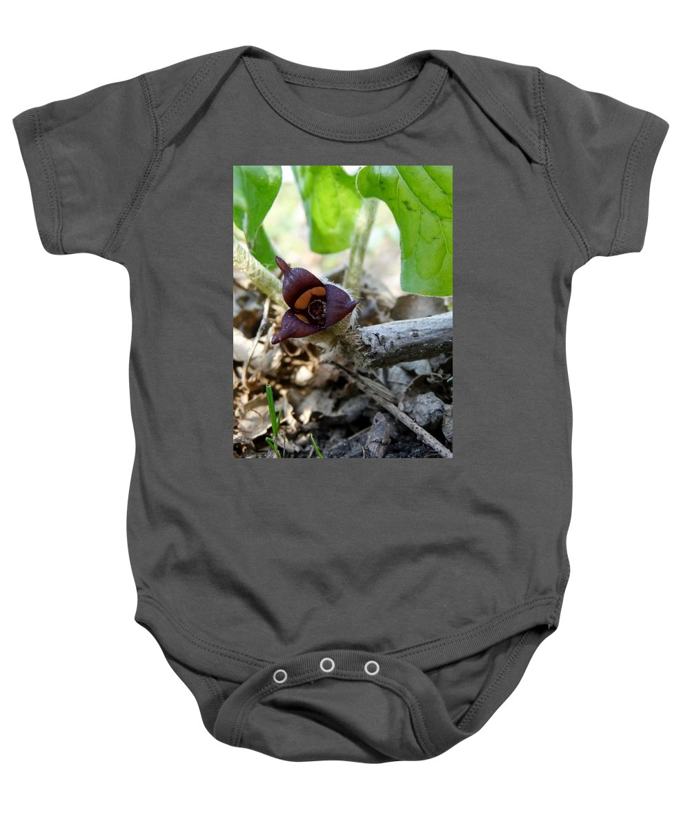 Close-up Of Wild Ginger Baby Onesie featuring the photograph Close-up Of Wild Ginger by Cynthia Woods