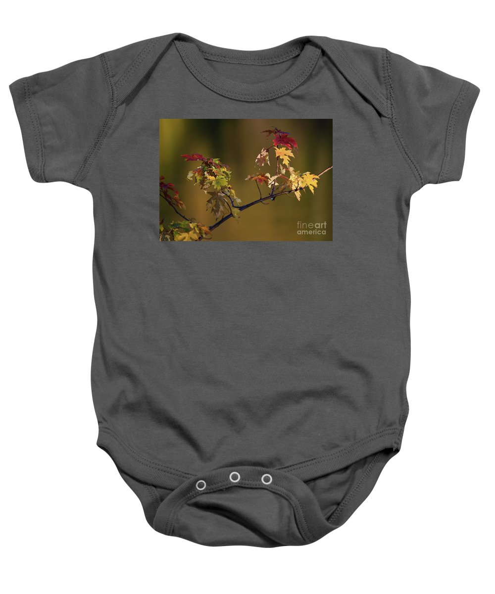 Fall Baby Onesie featuring the photograph Color On A Stick by Robert Pearson