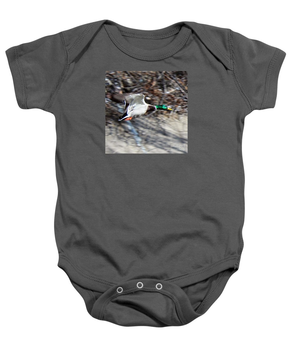 Mallard Baby Onesie featuring the photograph Colorado Mallard In Flight by Arizona Lowe