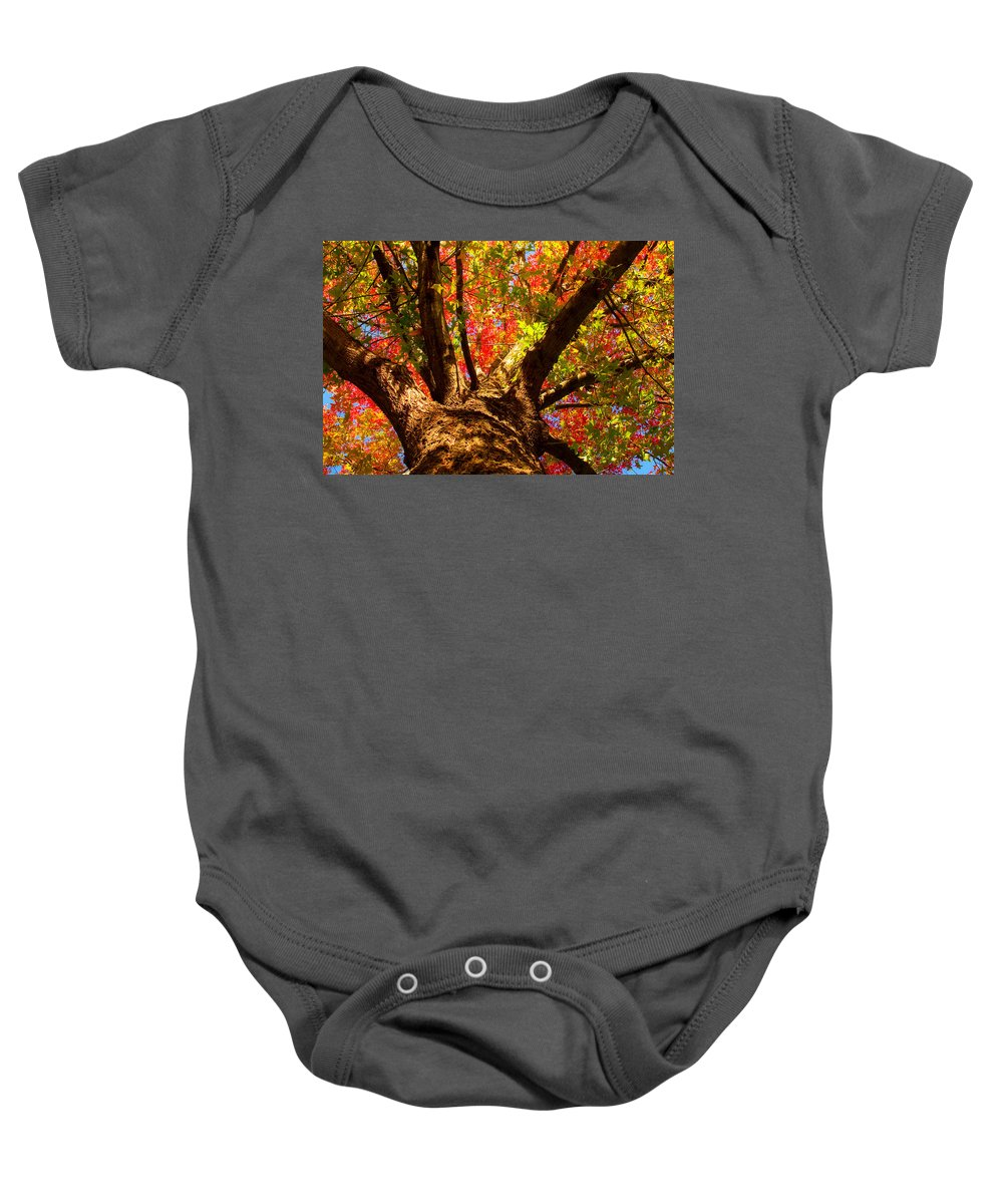 Forest Baby Onesie featuring the photograph Colorful Autumn Abstract by James BO Insogna