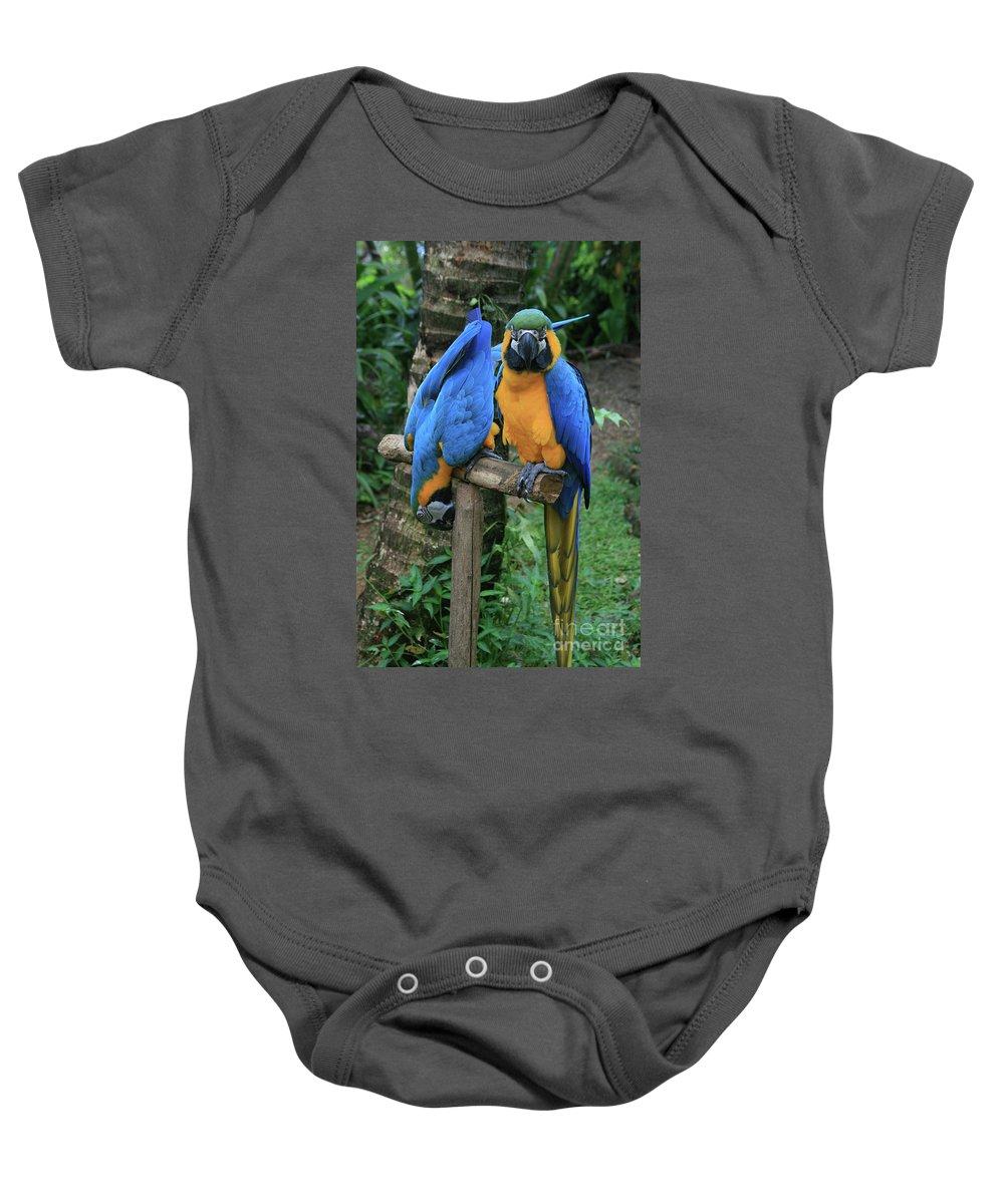 Aloha Baby Onesie featuring the photograph Colourful Macaw Pohakumoa Maui Hawaii by Sharon Mau