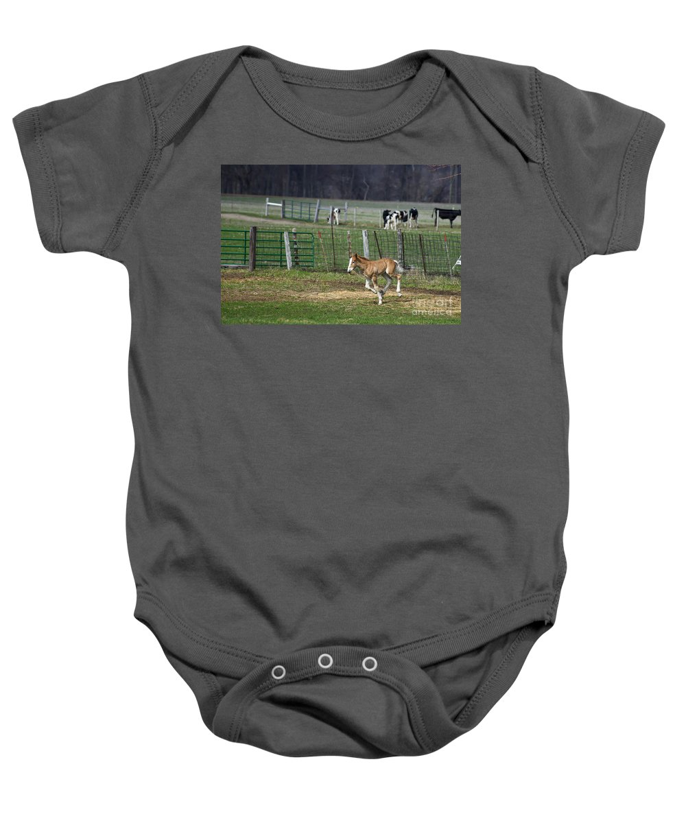 Horse Baby Onesie featuring the photograph Colt Play With Hay by David Arment