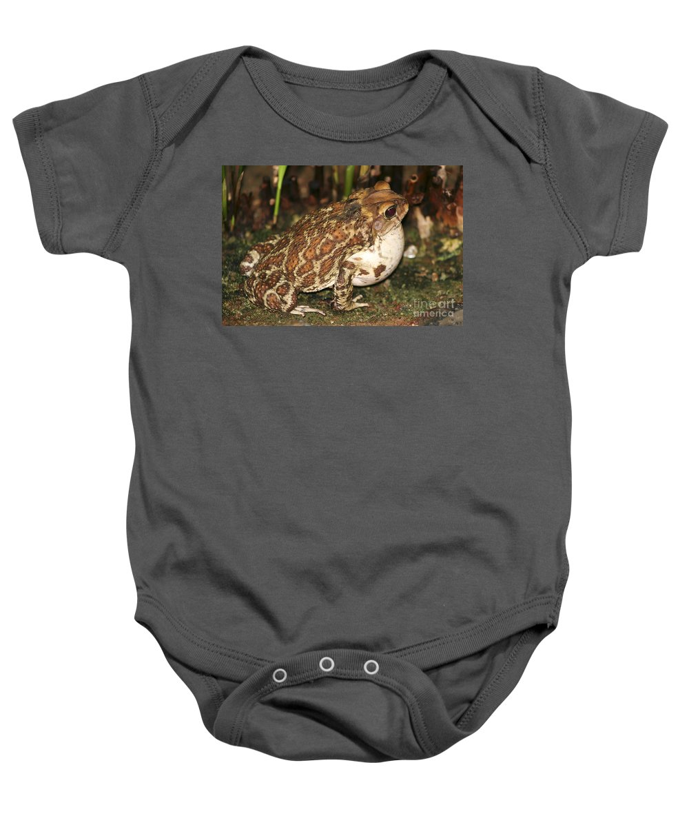 Animal Baby Onesie featuring the photograph Common Toad by Teresa Zieba