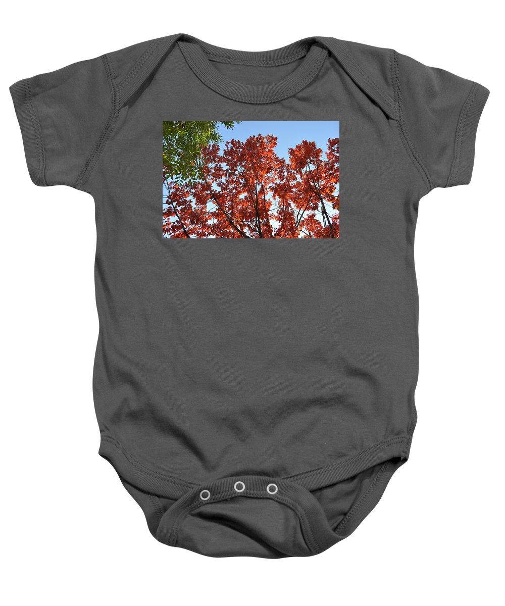 Autumn Oak Tree Baby Onesie featuring the painting Contrast In Autumn by Georgeta Blanaru
