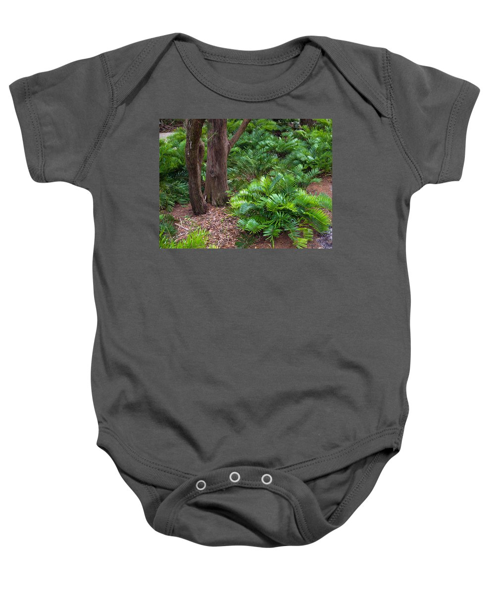 Florida; Coontie; Zamia; Integrifolia; Arrowroot; Indian; Bread; Breadroot; Plant; Rare; Wild; Prote Baby Onesie featuring the photograph Coontie Florida Arrowroot Or Indian Breadroot by Allan Hughes