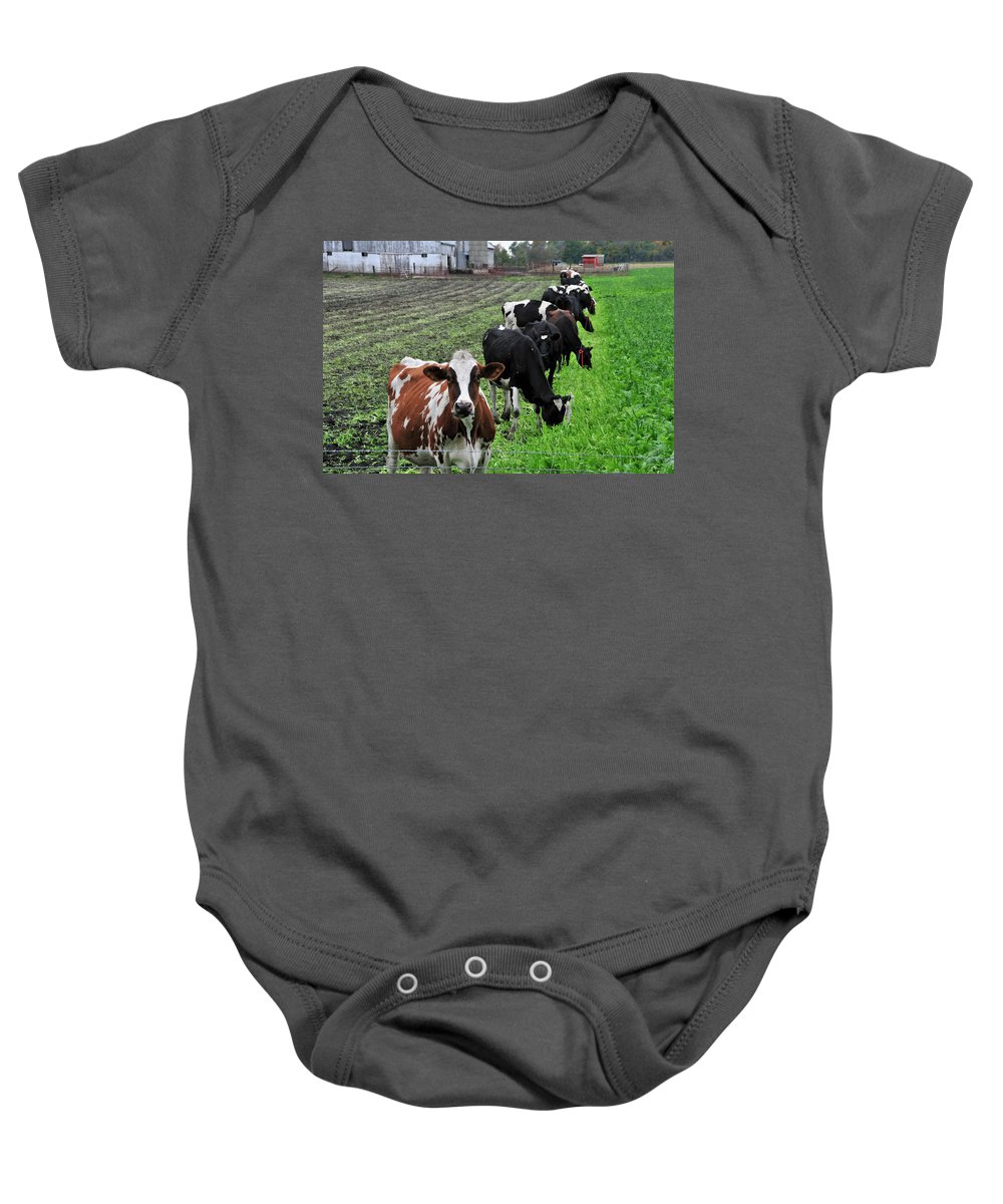 Cows Baby Onesie featuring the photograph Cow Line Up by David Arment