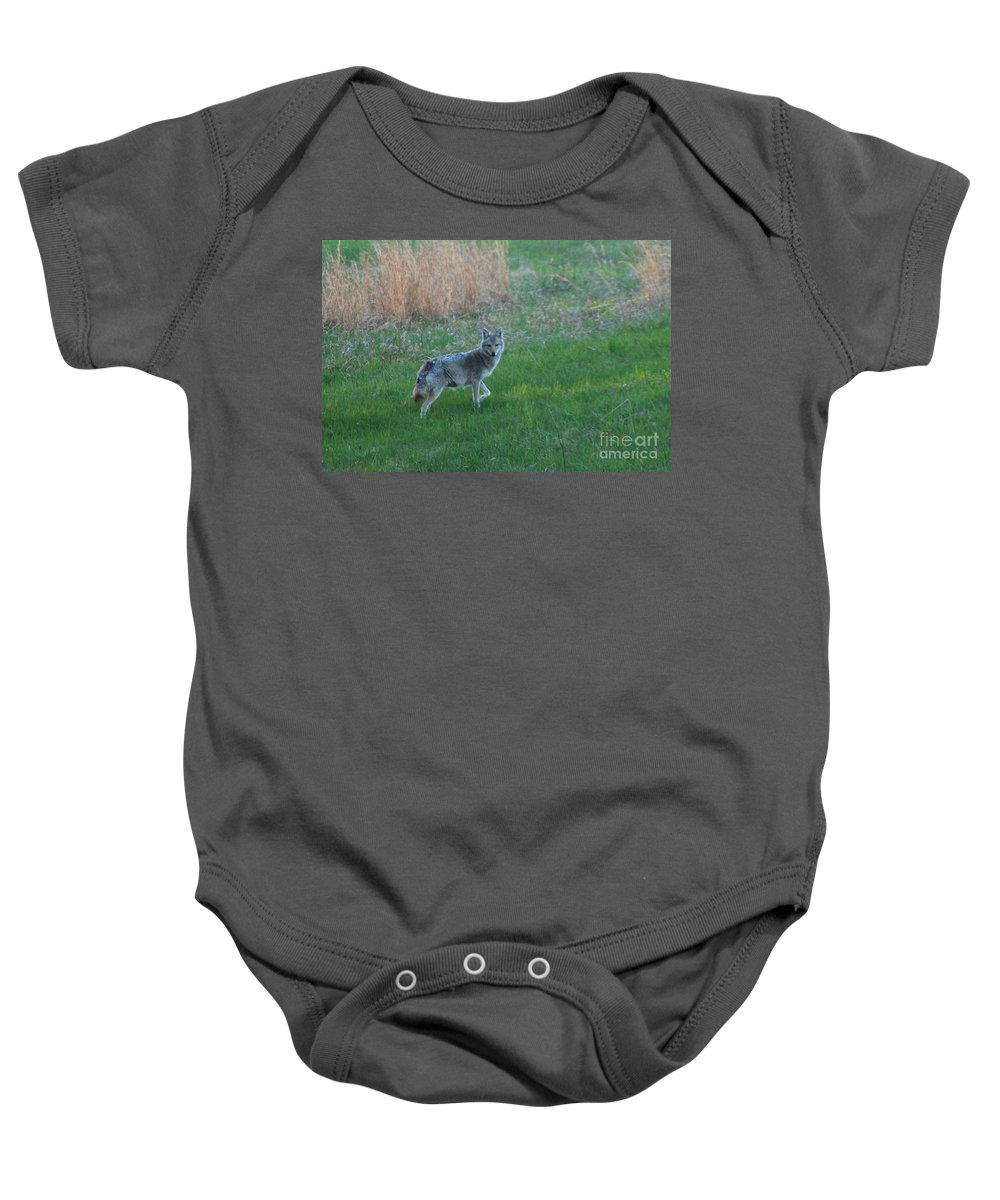 Coyote Baby Onesie featuring the photograph Coyote Stance by Neal Eslinger