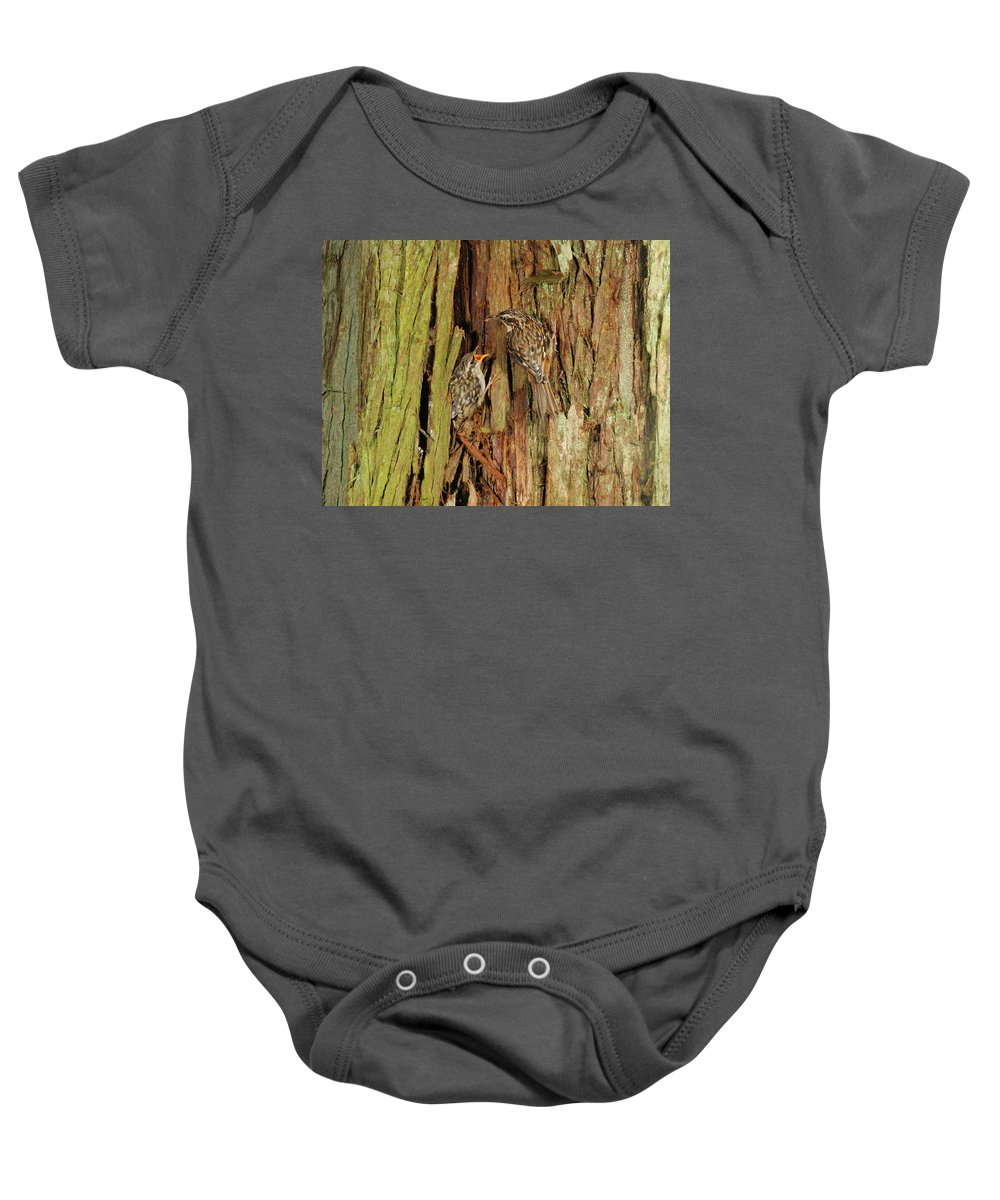 Portrait Baby Onesie featuring the photograph Creeper Family by Damon Calderwood