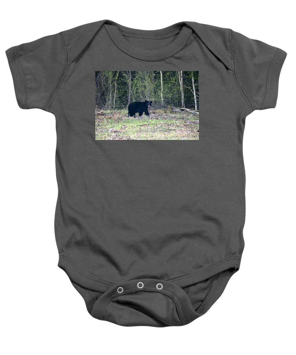 Black Bear Nature Wild Animal Trees Forest Rainbow Lodge Piprell Lake Saskatchewan Baby Onesie featuring the photograph Curious Black Bear by Andrea Lawrence