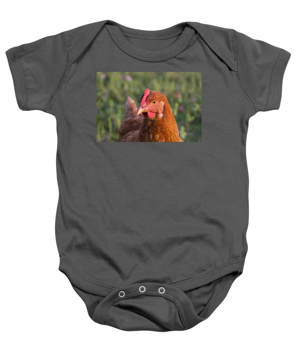 Chicken Curious Brown Red Green Grass Farm Rural Baby Onesie featuring the photograph Curious Chicken by Andrei Shliakhau