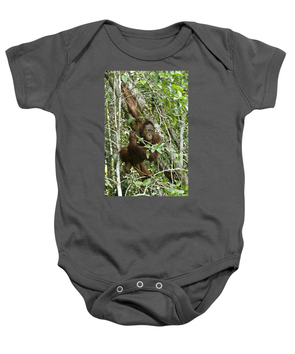Asia Baby Onesie featuring the photograph Curious George by Michele Burgess