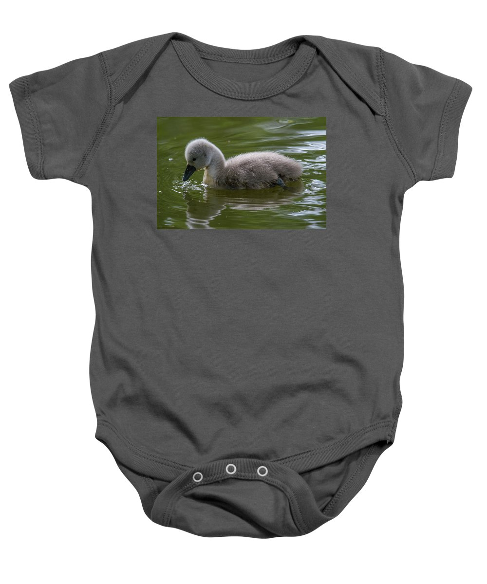 Cygnet Baby Onesie featuring the photograph Cygnet by Stephen Jenkins