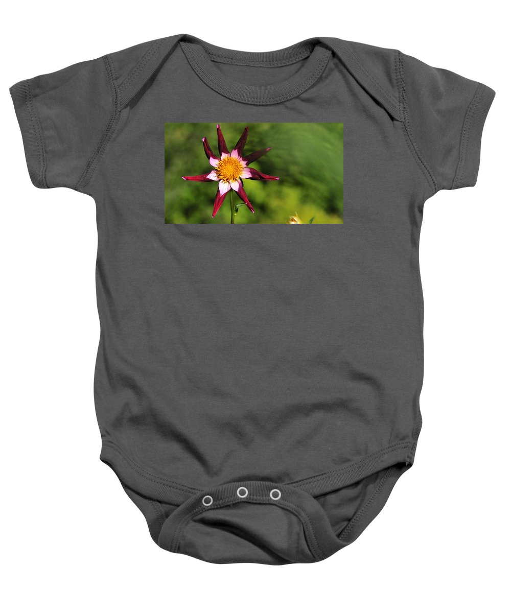 Flower Baby Onesie featuring the photograph Dahlia Red White And Green by David Arment