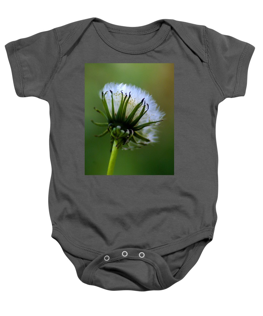 Flowers Baby Onesie featuring the photograph Dandy by Ben Upham III