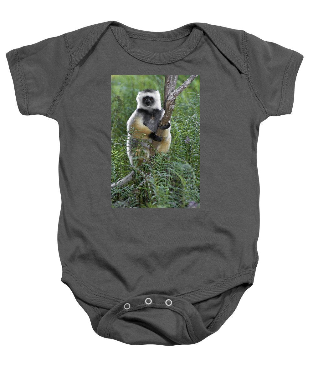 Madagascar Baby Onesie featuring the photograph Diademed Sifaka by Michele Burgess