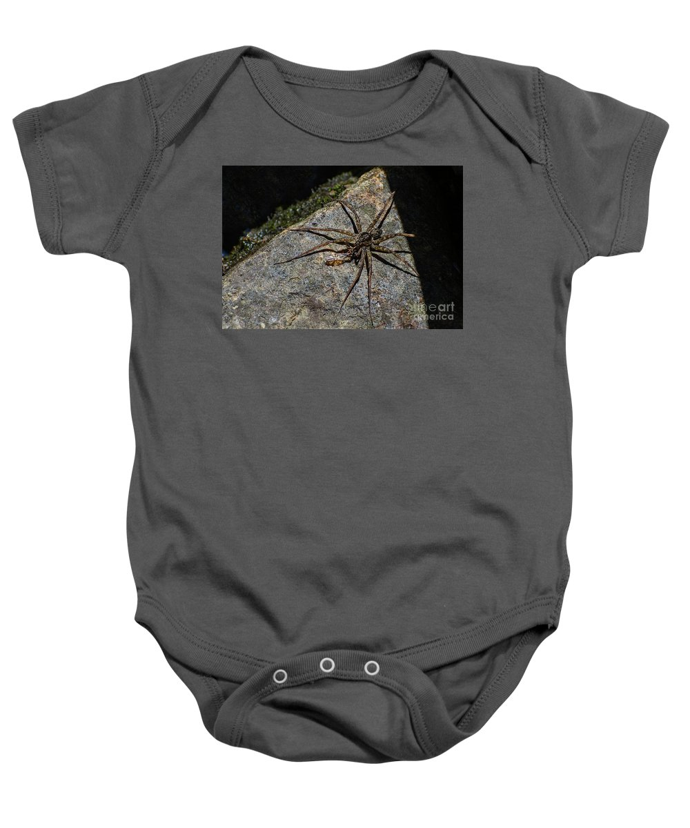 Spiny Baby Onesie featuring the photograph Dock Spider by Les Palenik