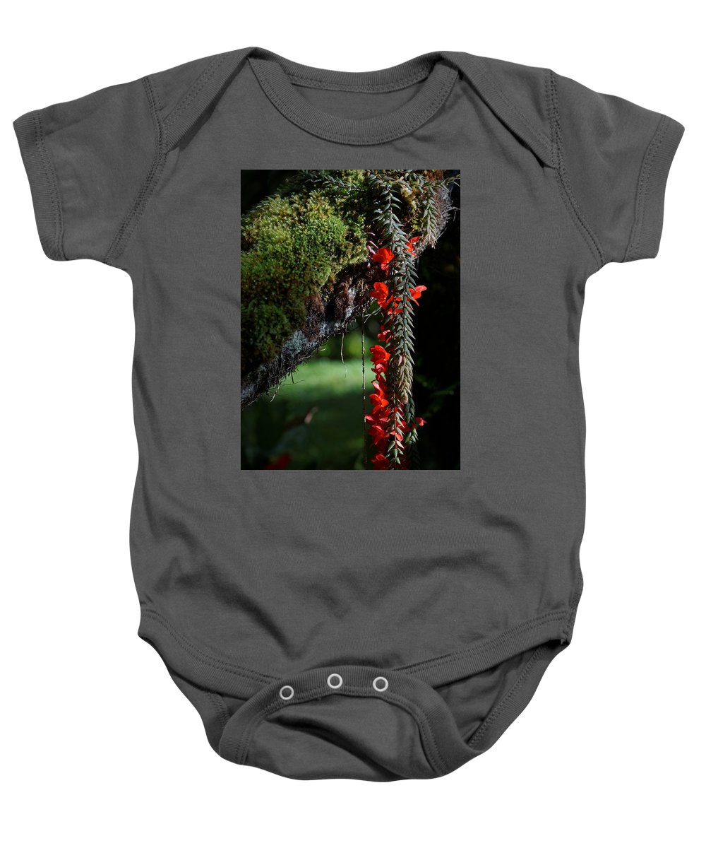 Big Island Baby Onesie featuring the photograph Donkey Tail Blossoms by Wayne Wilkinson