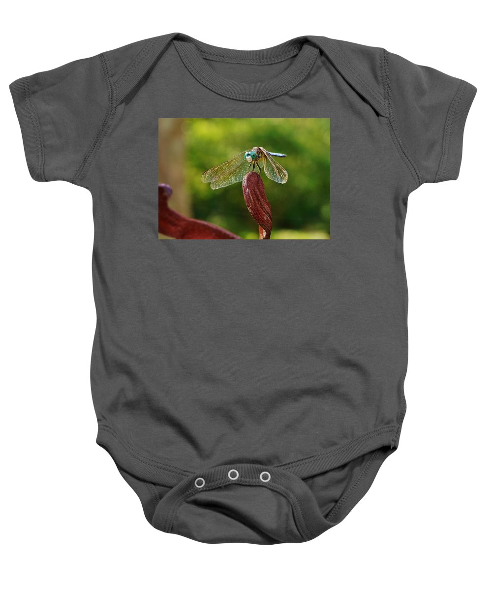 Dragonfly Baby Onesie featuring the photograph Dragonfly Resting II by Beth Deitrick