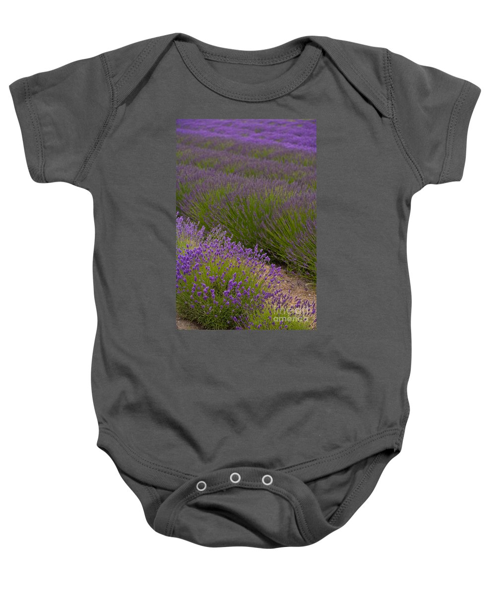 Lavender Baby Onesie featuring the photograph Early Morning Lavender by Mike Reid