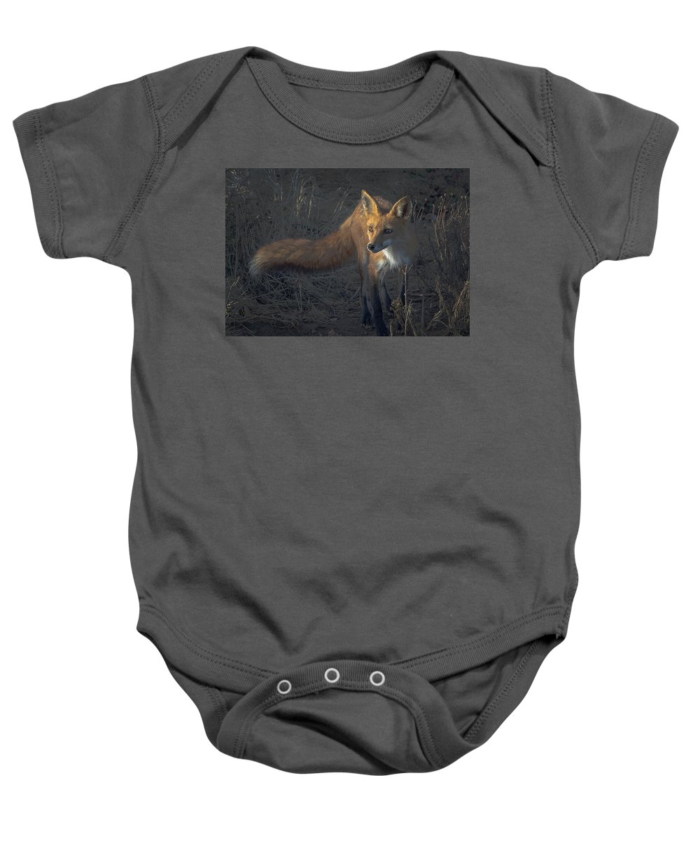 Animal Baby Onesie featuring the photograph Early Morning Red Fox Prowl by Leslie Reagan - Joy To The Wild Photos
